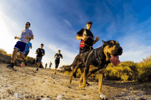 a bunch of people wearing sunglasses hiking with a dog