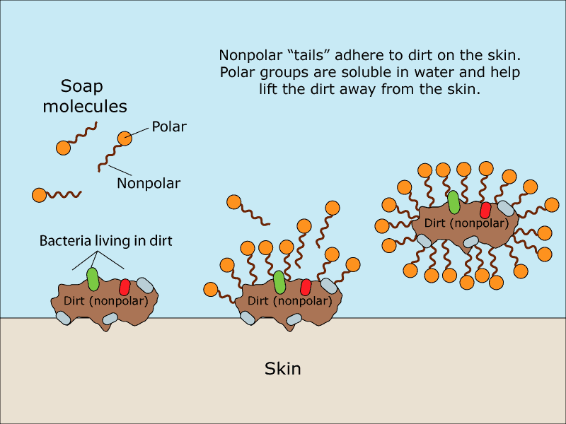 diagram of how soap lifts dirt from the skin
